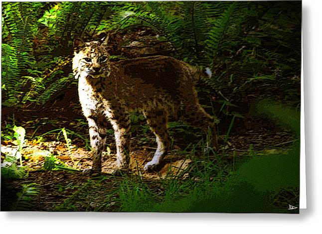 Lynx Rufus Greeting Cards - Lynx rufus Greeting Card by David Lee Thompson