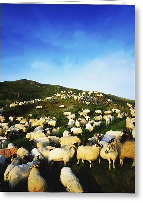 Full Body Greeting Cards - Maam Cross, Co Galway, Ireland Sheep Greeting Card by The Irish Image Collection