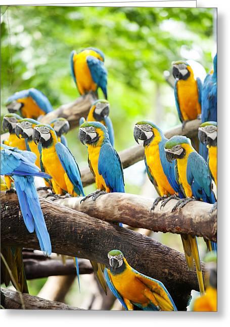 Macaw Greeting Card by Anek Suwannaphoom