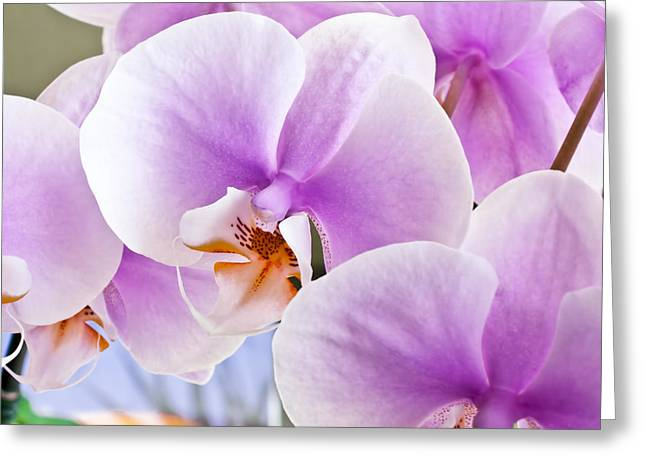 Epiphyte Greeting Cards - Macro Pink Orchids Greeting Card by Joe Carini - Printscapes