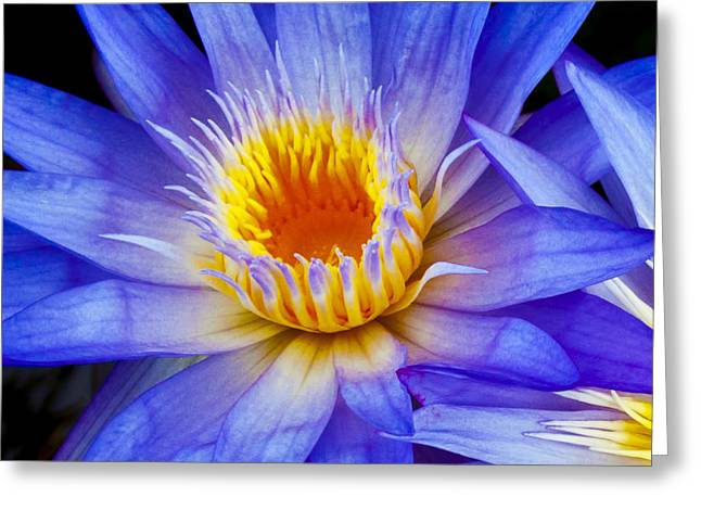 Close Focus Floral Greeting Cards - Macro Waterlily Greeting Card by Joe Carini - Printscapes