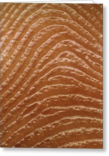Macrophoto Of Fingerprint Of A Man Greeting Card by Martin Dohrn.