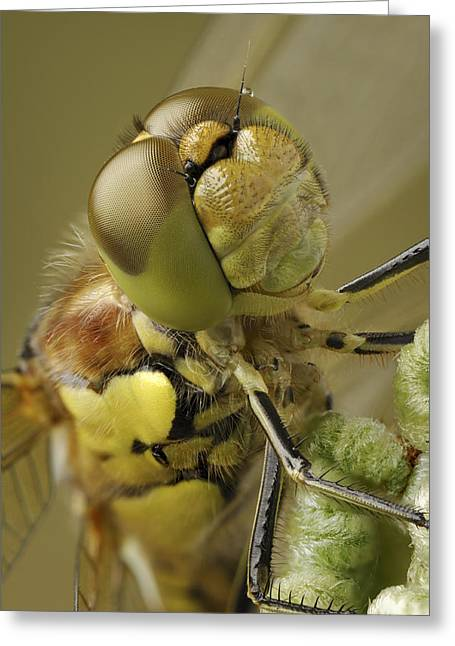 Dragonflies Greeting Cards - Made By Nature Greeting Card by Andy Astbury