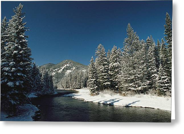 Gallatin River Greeting Cards - Madison River, Gallatin National Greeting Card by Raymond Gehman