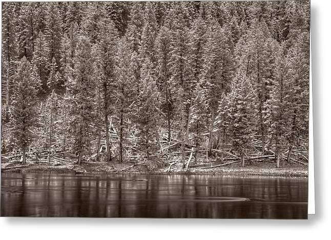 Madison River Yellowstone Bw Greeting Card by Steve Gadomski