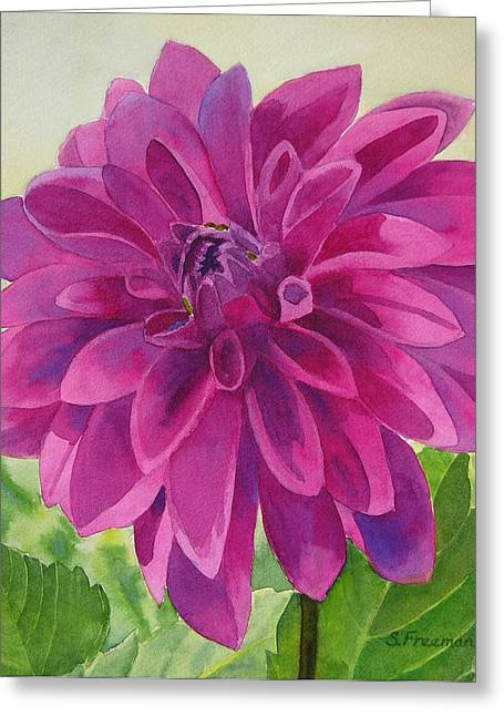 Dahlia Greeting Cards - Magenta Dahlia Greeting Card by Sharon Freeman
