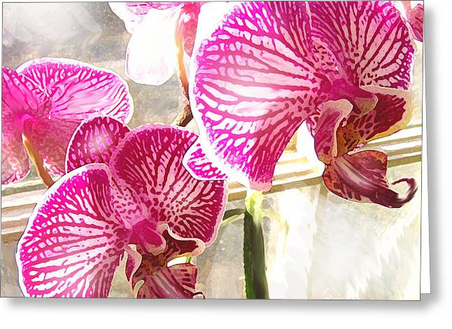 Phalenopsis Greeting Cards - Magenta Orchids Greeting Card by Jane Schnetlage