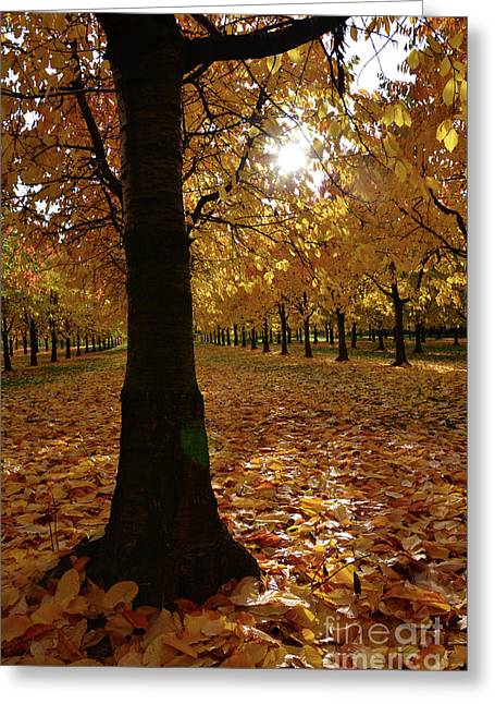 Colourfully Greeting Cards - Magic Autumn Color1 Greeting Card by Bruno Santoro