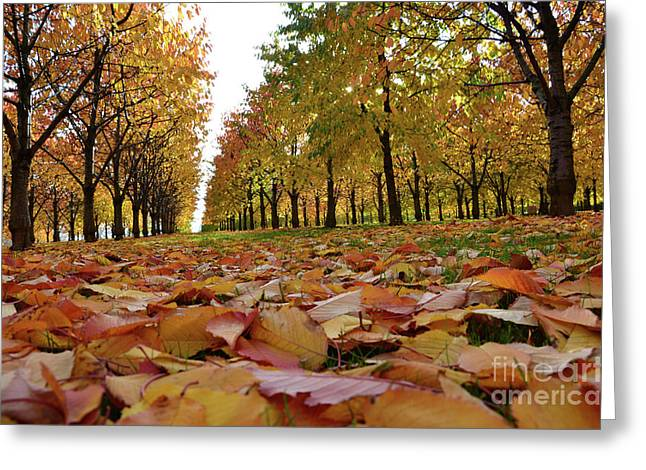 Autumn Sheets Greeting Cards - Magic Cherry Trees Greeting Card by Bruno Santoro