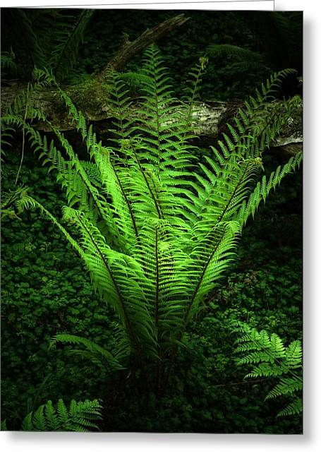 Ghostly Greeting Cards - Magic Fern Greeting Card by Svetlana Sewell