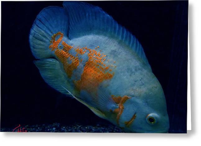 Magic Fish Name Oscar  Greeting Card by Colette V Hera  Guggenheim