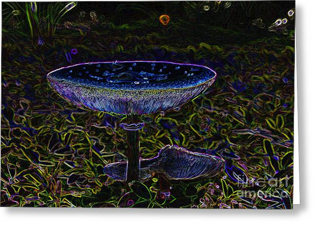 Forest Floor Greeting Cards - Magic Mushroom Greeting Card by David Lee Thompson