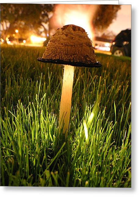 Toadstools Pyrography Greeting Cards - Magic Mushroom Greeting Card by Jack Edjourian