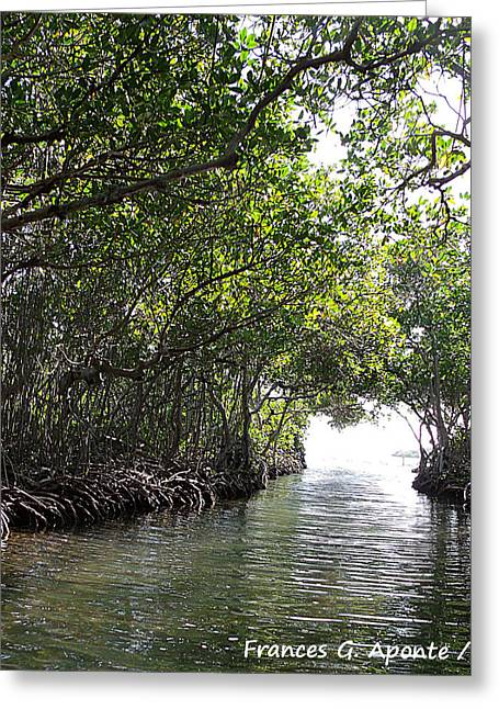Mangrove Forest Greeting Cards - Magical green Greeting Card by Frances G Aponte