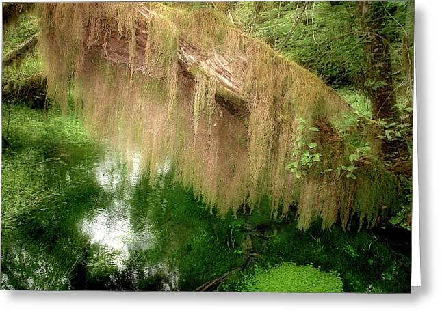 Enchanting Greeting Cards - Magical Hall of Mosses - Hoh Rain Forest Olympic National Park WA USA Greeting Card by Christine Till