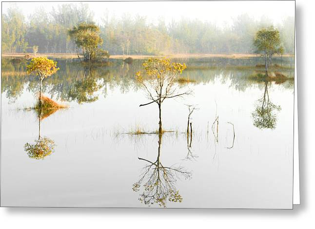 Lily Pad Greeting Cards Greeting Cards - Magical Morning Greeting Card by Debra and Dave Vanderlaan