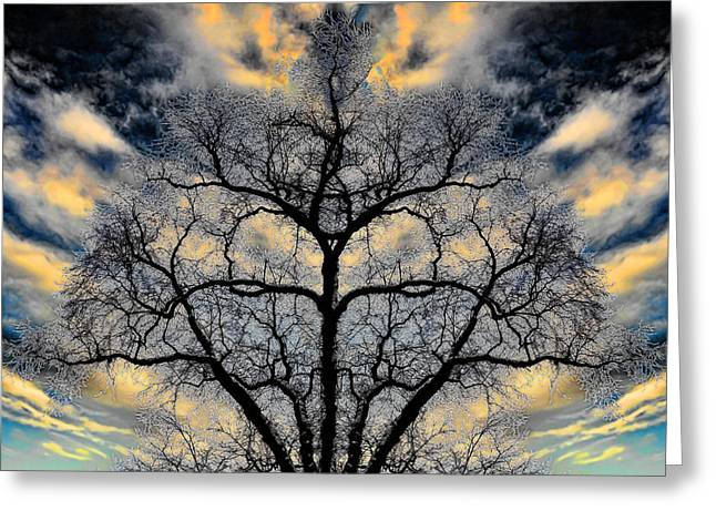 Lightscapes Greeting Cards - Magical Tree Greeting Card by Hakon Soreide