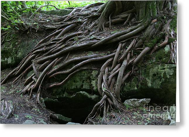 Chris Hill Greeting Cards - Magical Tree Roots Greeting Card by Chris Hill