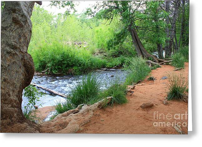 Magical Trees at Red Rock Crossing Greeting Card by Carol Groenen