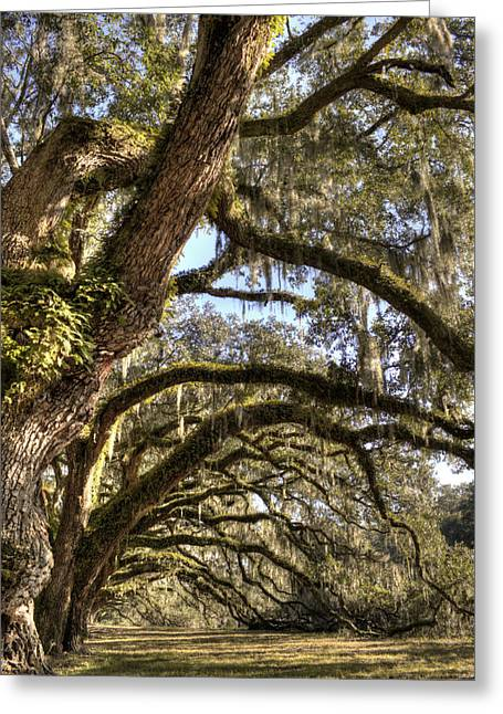 Live Oak Trees Greeting Cards - Magnificant Live Oak Trees Color Greeting Card by Dustin K Ryan