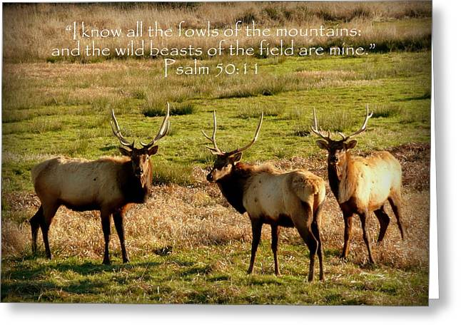 Inspirational Greeting Cards - Magnificent Bull Elk Psalm 50 Greeting Card by Cindy Wright