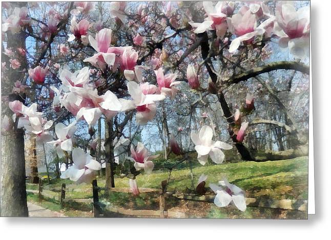 Flowering Trees Greeting Cards - Magnolia Closeup by Fence Greeting Card by Susan Savad