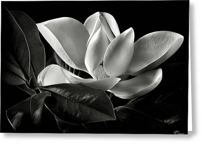 Flower Photography Greeting Cards - Magnolia in Black and White Greeting Card by Endre Balogh