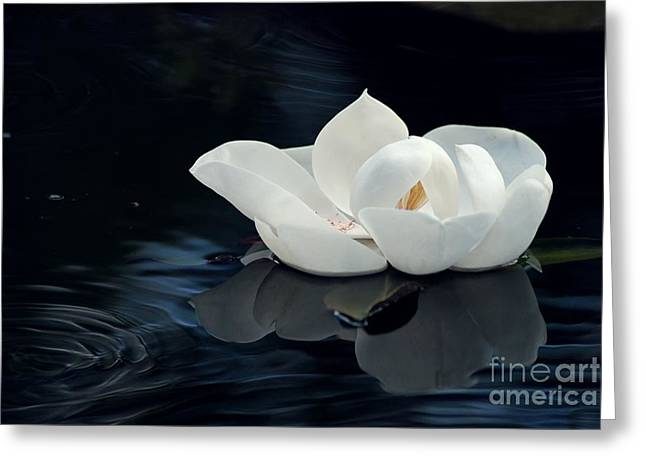 Clean Water Digital Art Greeting Cards - Magnolia Greeting Card by Kendra Longfellow