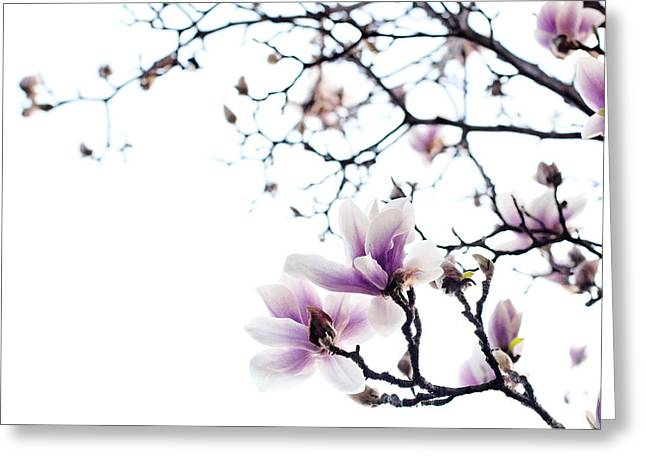 Pink Flower Branch Greeting Cards - Magnolia Greeting Card by Laura Melis