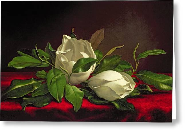 Best Sellers -  - White Cloth Greeting Cards - Magnolia Greeting Card by Martin Johnson Heade