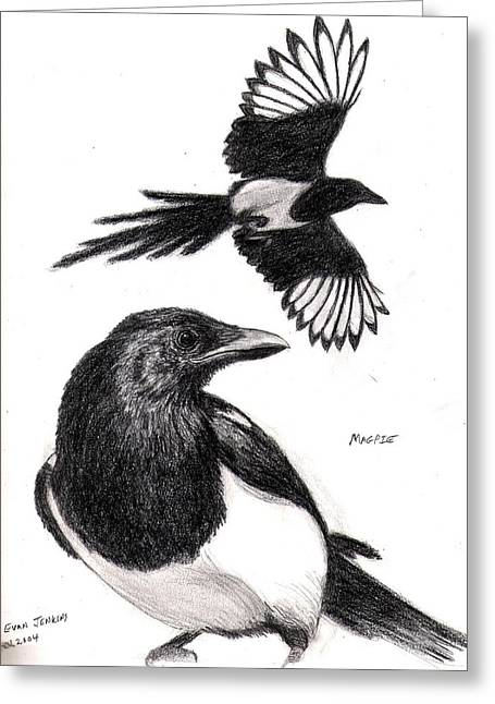 Black-billed Magpie Greeting Cards - Magpie Study Greeting Card by Evan and Tina  Jenkins