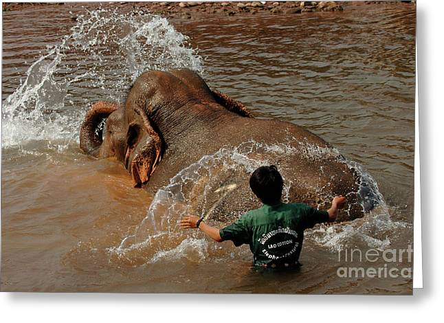 At Work Greeting Cards - Bathing An Elephant Laos Greeting Card by Bob Christopher