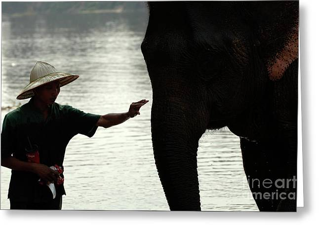 Silouette Greeting Cards - Mahut With Elephant Greeting Card by Bob Christopher