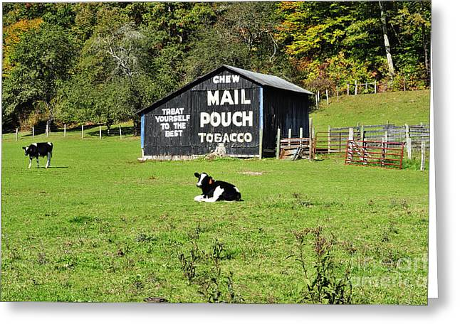 Randolph County Greeting Cards - Mail Pouch Barn and Holsteins Greeting Card by Thomas R Fletcher
