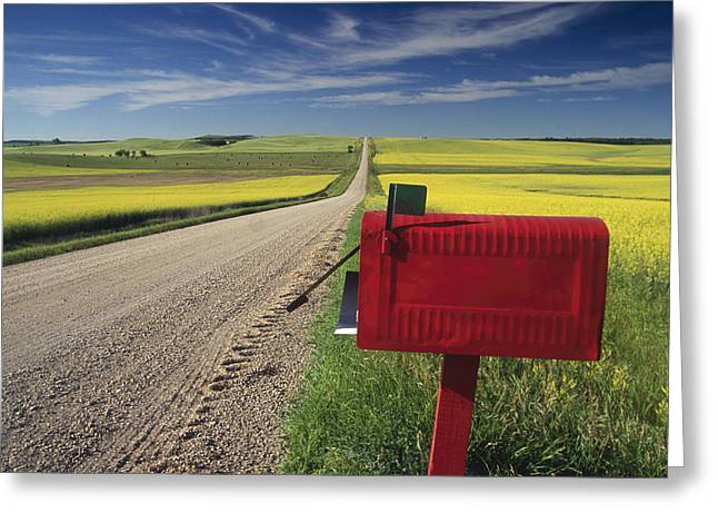 Country Dirt Roads Greeting Cards - Mailbox On Country Road, Tiger Hills Greeting Card by Dave Reede