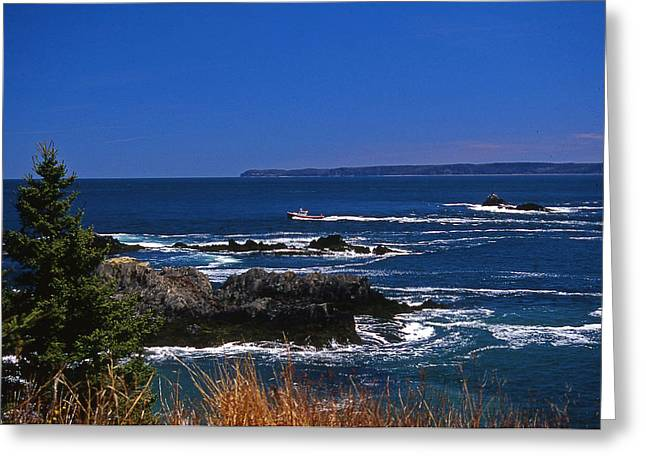 Senic View Greeting Cards - Maine At West Quoddy Greeting Card by Skip Willits