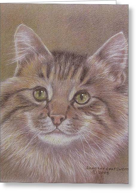 Dorothy Coatsworth Greeting Cards - Maine Coon Cat Greeting Card by Dorothy Coatsworth