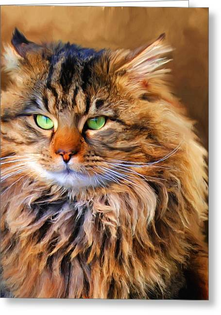Maine Coon Greeting Cards - Maine Coon Cat Greeting Card by Jai Johnson