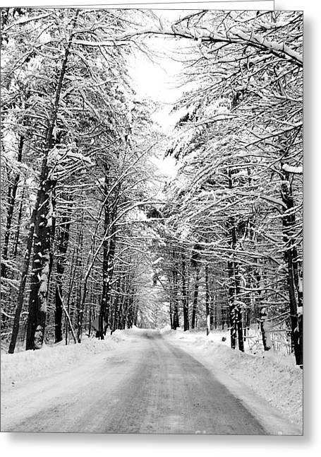 Christy Bruna Greeting Cards - Maine Deep Woods Tall Trees Greeting Card by Christy Bruna