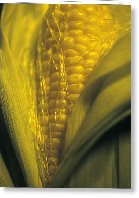 The Agricultural Life Greeting Cards - Maize Greeting Card by Kaj R. Svensson