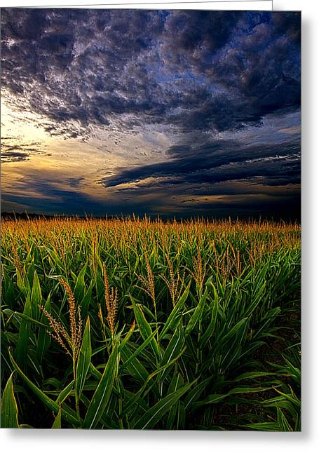 Geographic Greeting Cards - Maize Greeting Card by Phil Koch