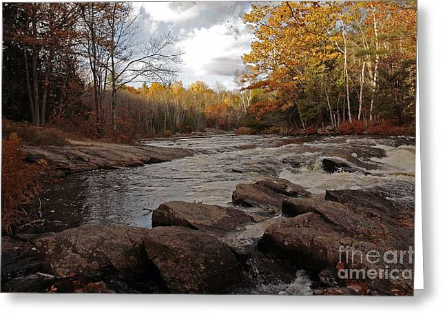 Shelley Myke Greeting Cards - Majestic Autumn Moments at Algonquin Proncial Park Greeting Card by Inspired Nature Photography By Shelley Myke