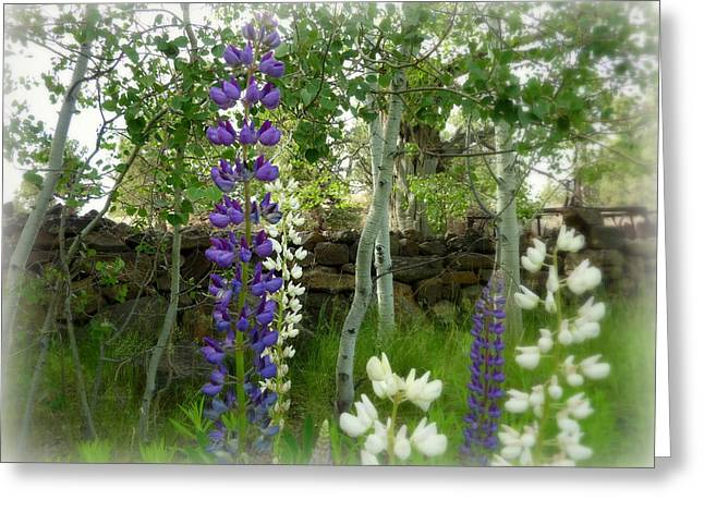 Majestic Delphinium And Quaking Aspen Greeting Card by Cindy Wright