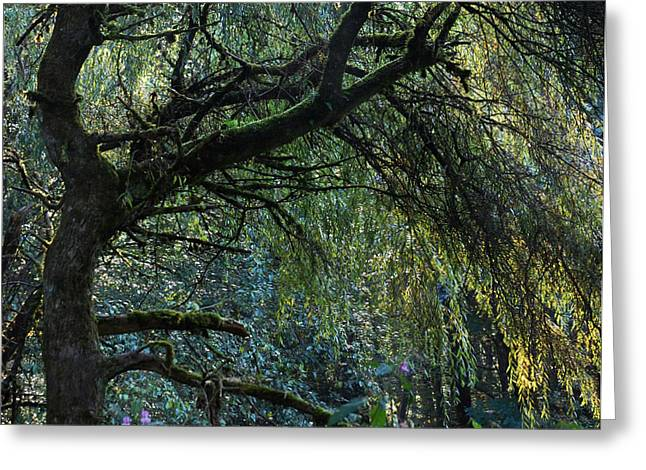 Willow Tree Greeting Cards - Majestic Weeping Willow Greeting Card by Marion McCristall