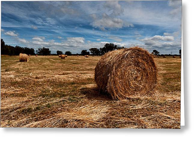 Hay Bales Digital Greeting Cards - Making Hay Greeting Card by Heather Thorning