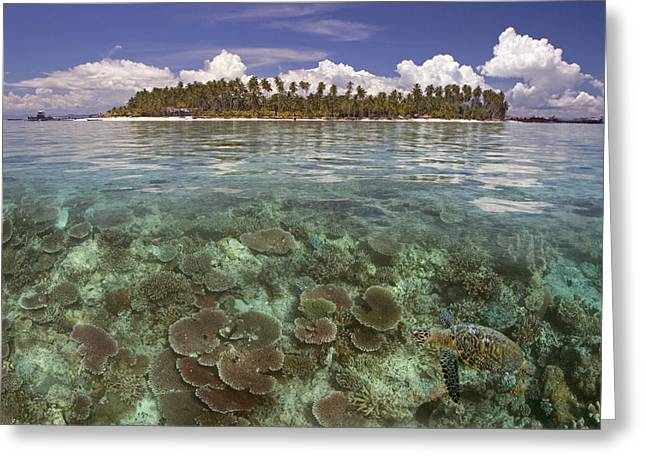 Reef Photos Greeting Cards - Malaysia, Mabul Island Greeting Card by Dave Fleetham - Printscapes