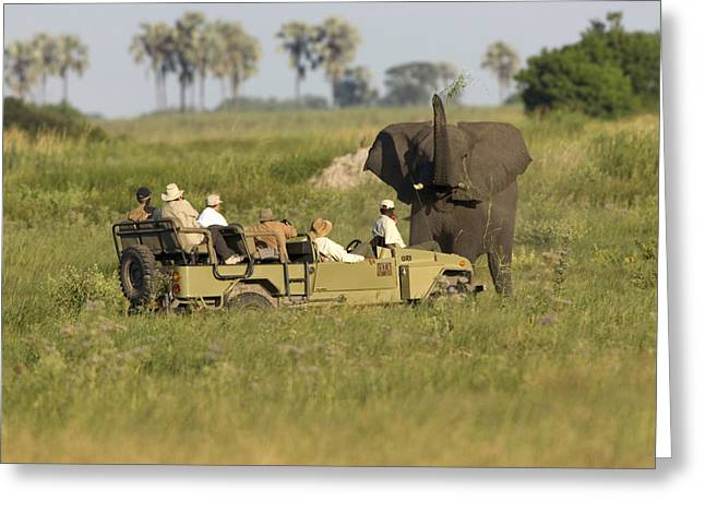 Car Carrier Greeting Cards - Male African Elephant Posturing Greeting Card by Roy Toft