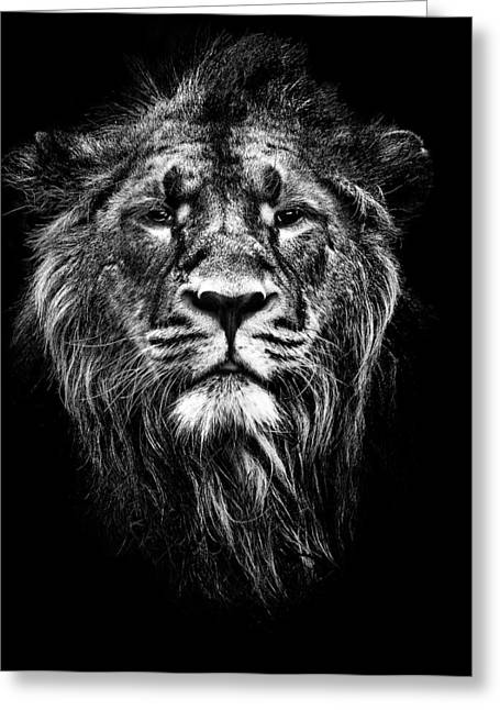 Jungle Animals Greeting Cards - Male Asiatic Lion Greeting Card by Meirion Matthias