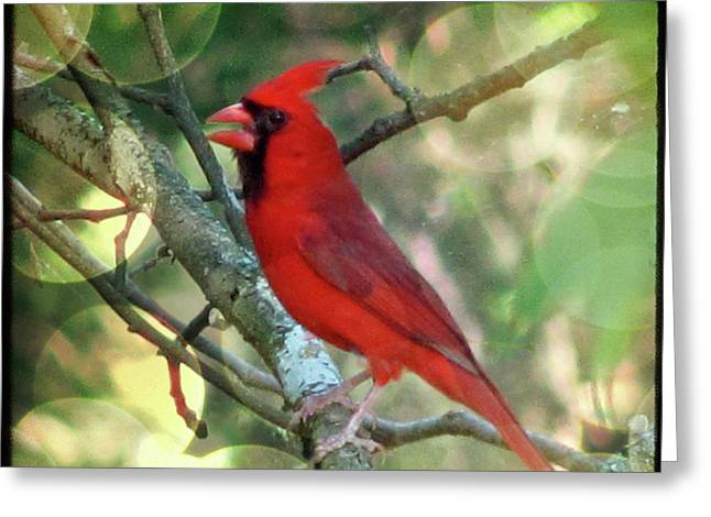 Ttv Greeting Cards - Male Cardinal Greeting Card by Amy Tyler