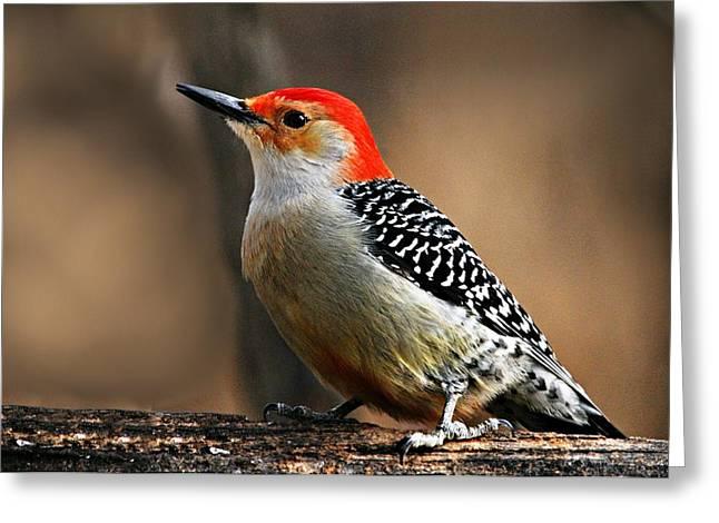 Male Red-bellied Woodpecker 4 Greeting Card by Larry Ricker